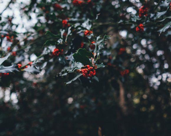 Vil du kjøpe kjøtt fra dyrevennlige produsenter til jul? Her har du noen tips!